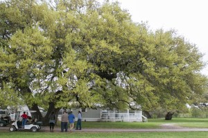 The Santa Anna Oak Tree is located in the Alamo River RV Park and Campground.