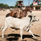 A charro attempts to rope a cow at A Day in Old Mexico & Charreada.