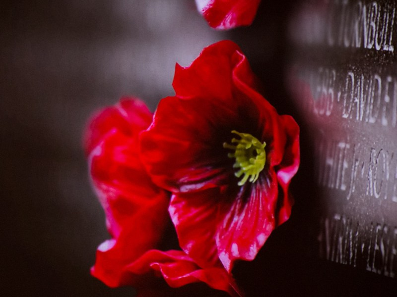 A poppy is the symbol to remember the fallen on Memorial Day.