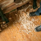Wood chips are scattered throughout Scott Albert's violin workshop.