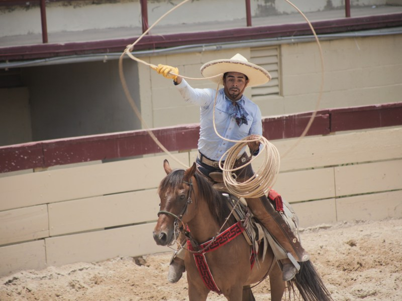 A charro participates in the piiales category in which the charro ropes the hind legs of a running horse to bring it to a stop.
