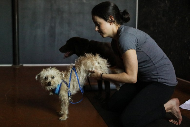 Transcend Yoga Instructor Ellen Wise McMahon helps her dog into a pose during a session of Dogi at Transcend.