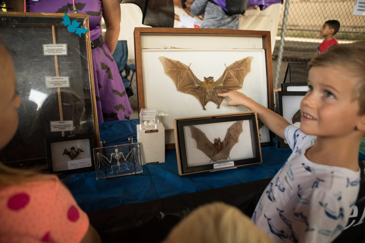 Bear, 5, points out the bat taxidermy to his family at the 5th Annual Bat Loco Bash.