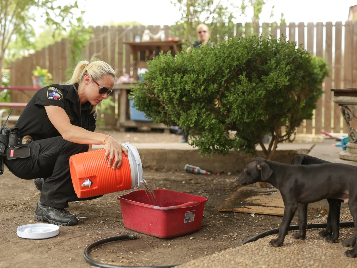 Animal Care Officer Kassi Bennett pours fresh water for dogs that didn't have clean water to drink, year to date the Animal Care Services has received over 70,000 calls from the 311 service.