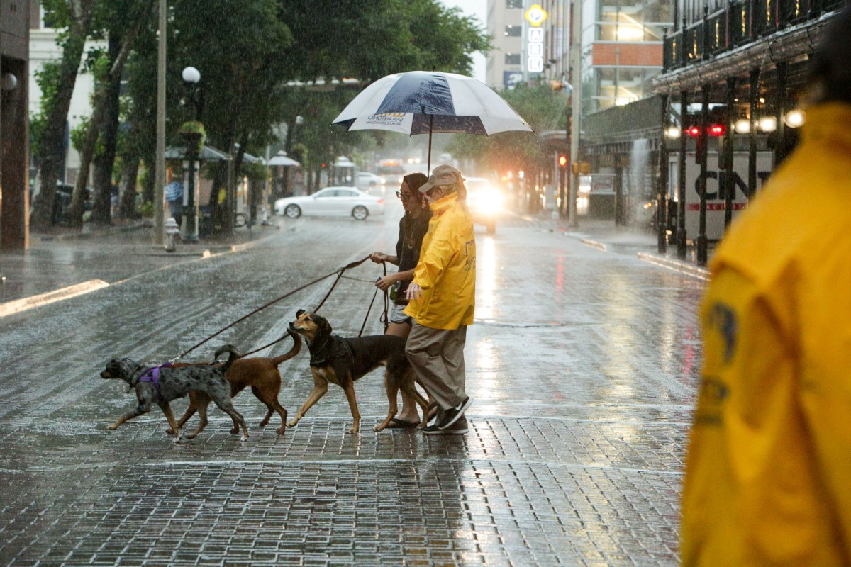 Centro Ambassador Sonya Green and Jessica Fernandez cross Houston Street with Green's dogs Haley, Cleo, and Lili May.