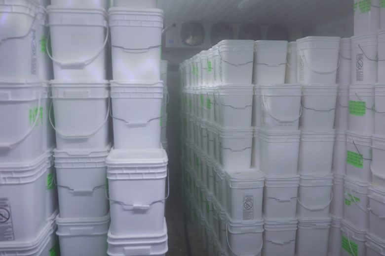 A freezer full of shaved ice is ready for customers at Las Nieves.