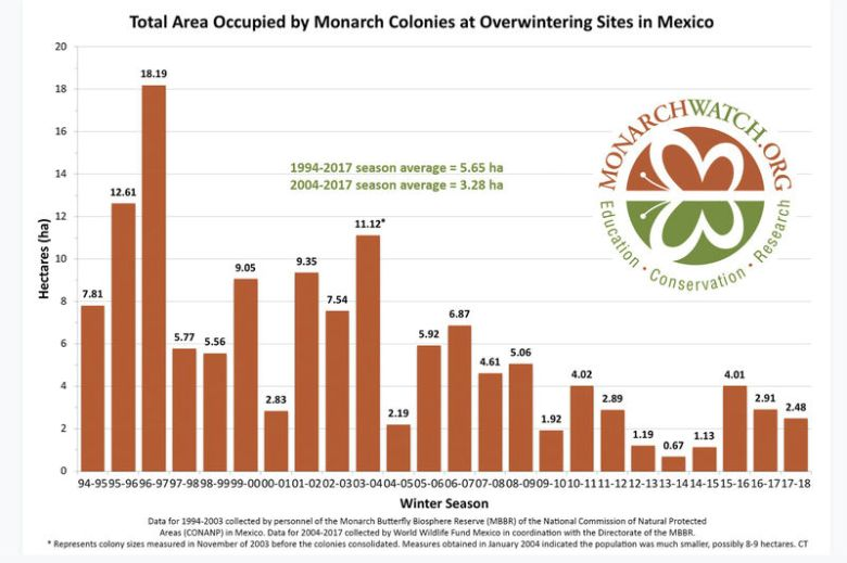 The monarch population has been estimated for decades by measuring the amount of forest occupied by the overwintering insects in Mexico.