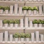Fake plants and containers are lined up in an orderly fashion on shelves.