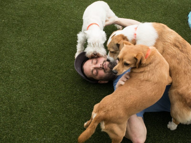 Max Golman, owner of Lucy's Doggy Daycare and Spa, receives puppy kisses in the small-dog area.