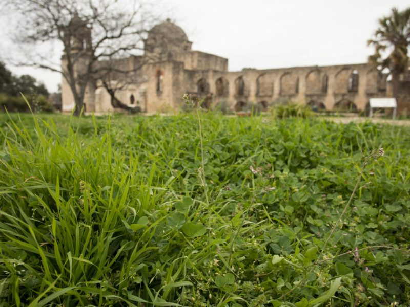 Weeds are overgrown throughout Mission San José.