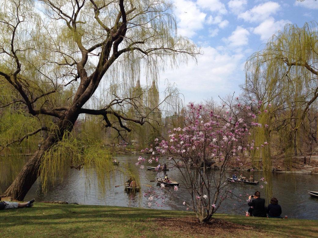 "The Brackenridge Park Conservancy will honor former Central Park Conservancy President Elizabeth ""Betsy"" Rogers at its third annual Spirit of Brackenridge Park gala on March 27."