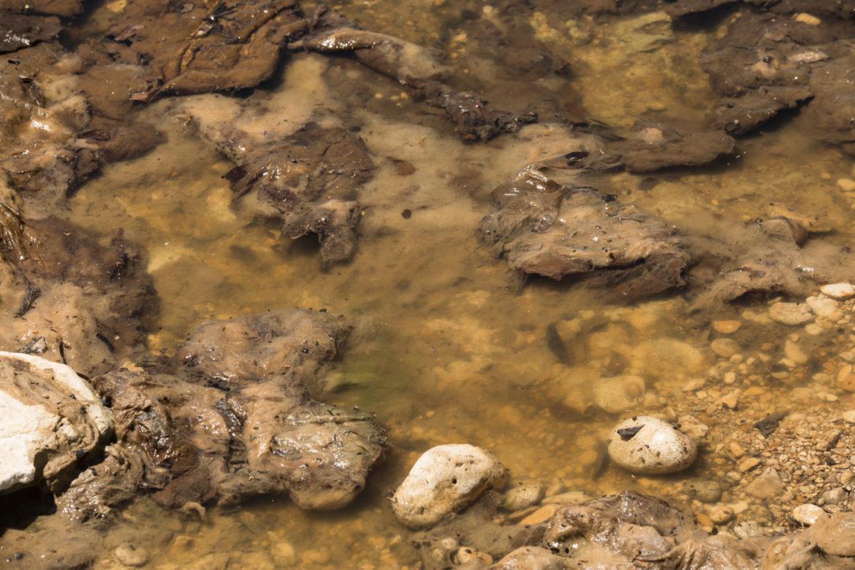 Cibolo Creek in Bulverde, Texas, has small pools of water containing algae.