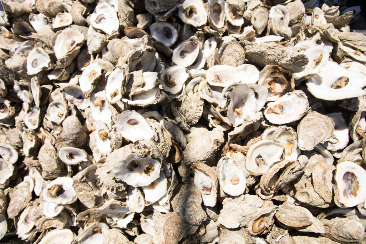 Oyster shells are disposed properly to be recycled back into the ocean.