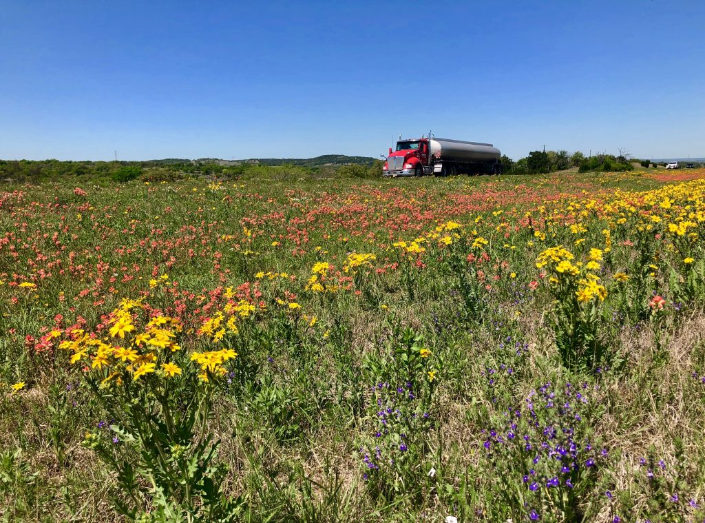 Indian paintbrush and Huisache daisies line the Interstate 10 median near Kerrville.