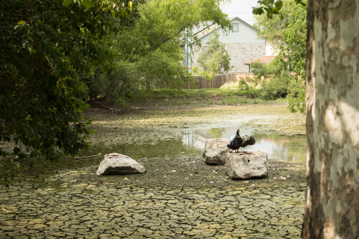 A duck sits on top of a rock inside Eden Duck Pond.