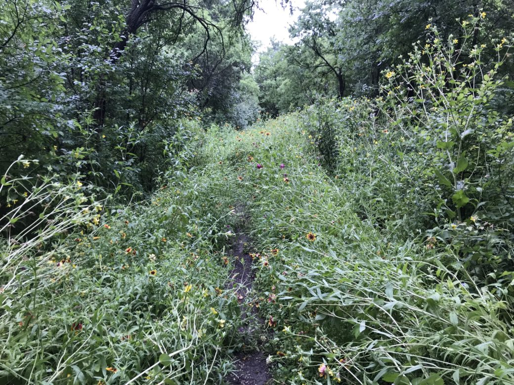 Wildflowers choke the trail at Olmos Basin Park.