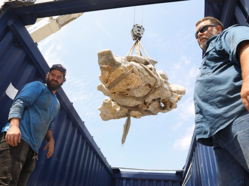 Scholars' Rock is lifted out of the transportation vessel that was shipped from China.