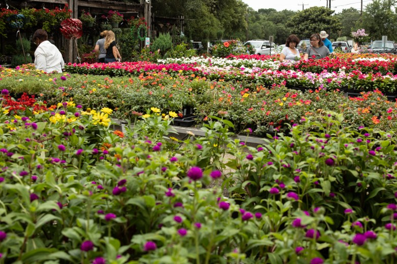 People walk through the potted flower area.