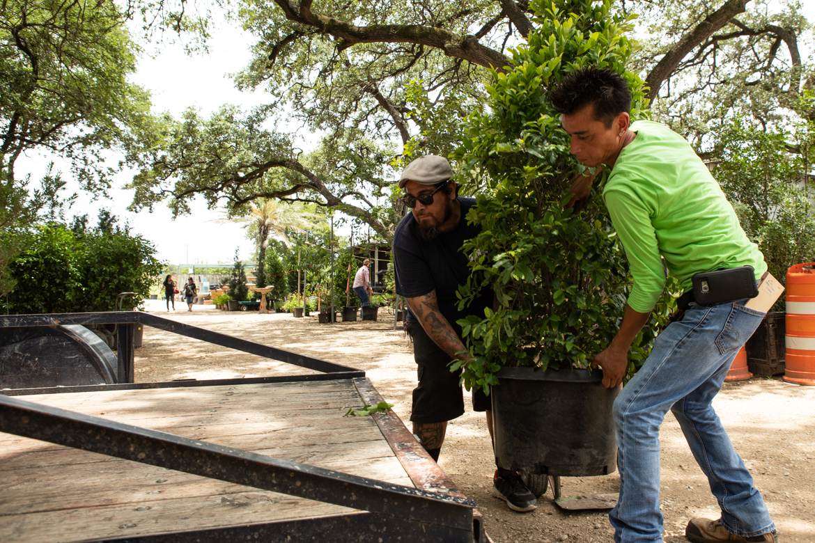 (From left) Milberger's Landscaping And Nursery employees Josh Chavez and Peter Garza help a customer load shrubs onto his truck.