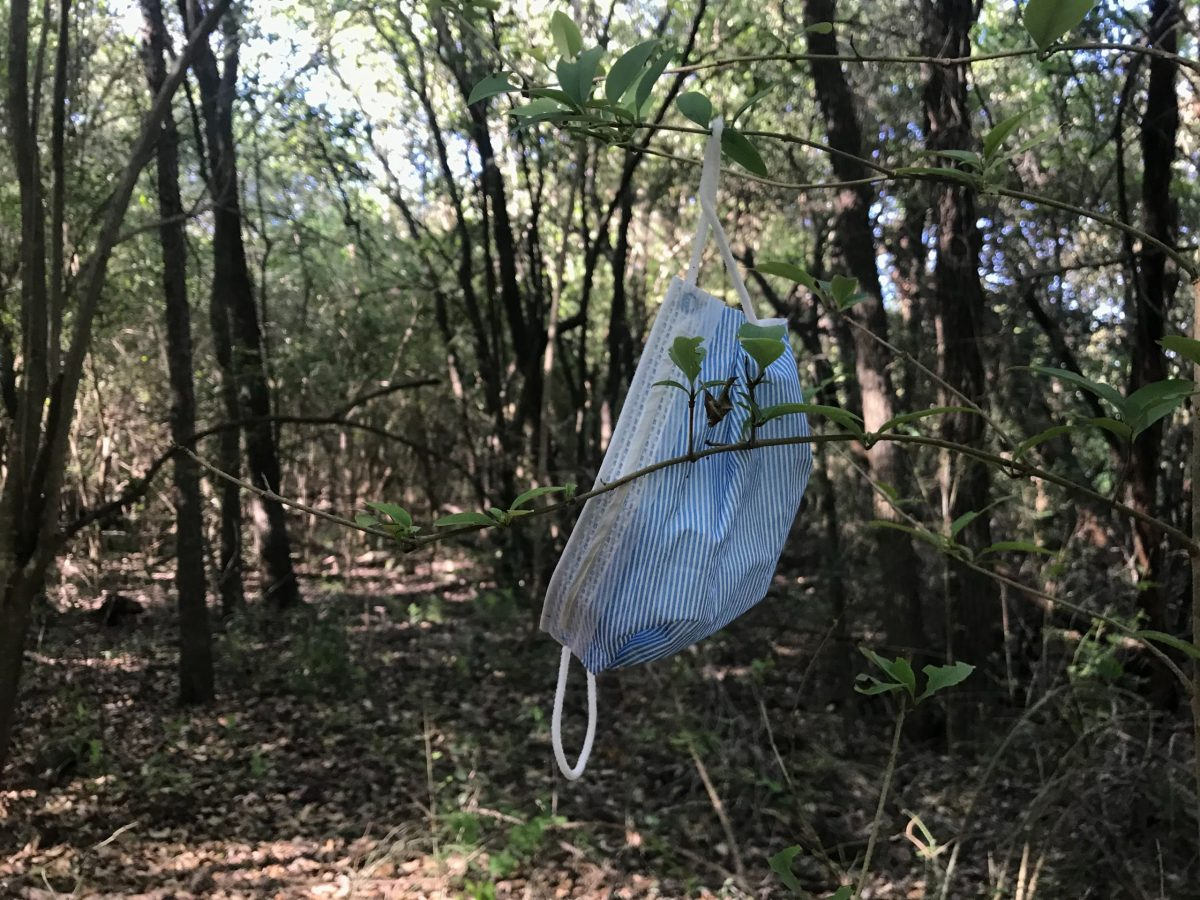 A face mask found hanging on a branch along a mountain bike trail at Olmos Basin Park.