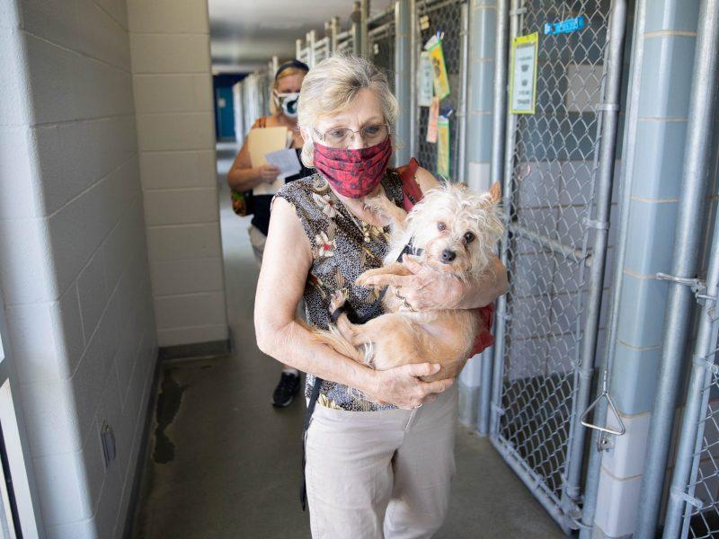 Animal Care Services Archives   San Antonio Report