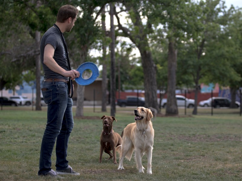 Thomas Sinard plays fetch with his golden retriever, Sierra, and another dog at the newly-opened Maverick Dog Park on Saturday. Located at the corner of Broadway Street and East Jones Avenue, the off-leash dog park features a separate area for small dogs, and a dog shower and drinking fountain.