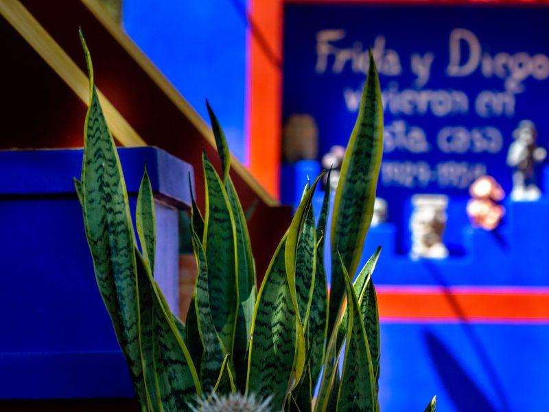 In partnership with the Museo Frida Kahlo, the San Antonio Botanical Garden re-created Kahlo's garden at the Casa Azul in Mexico City.