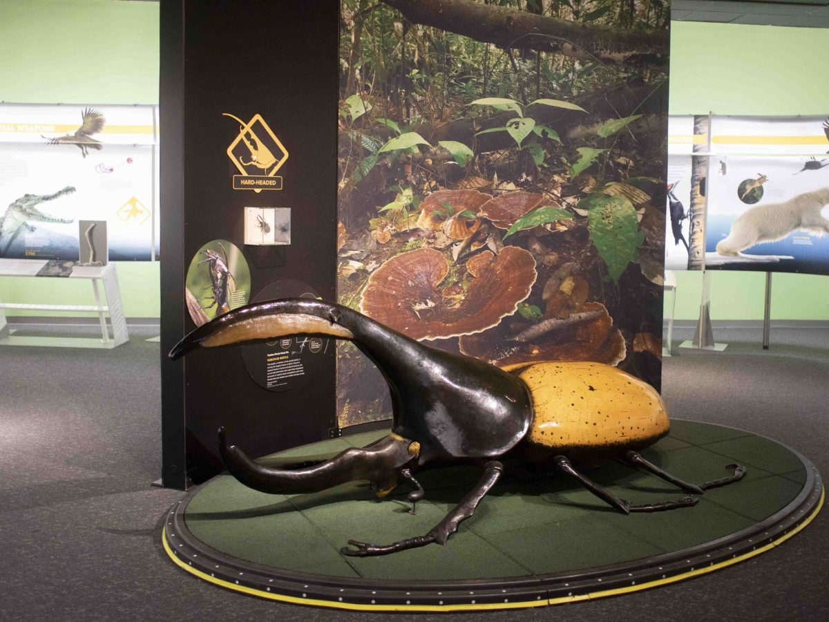 An enlarged beetle invites children to play on the creature while viewing Extreme Creatures: Life at the Limits at the Witte.