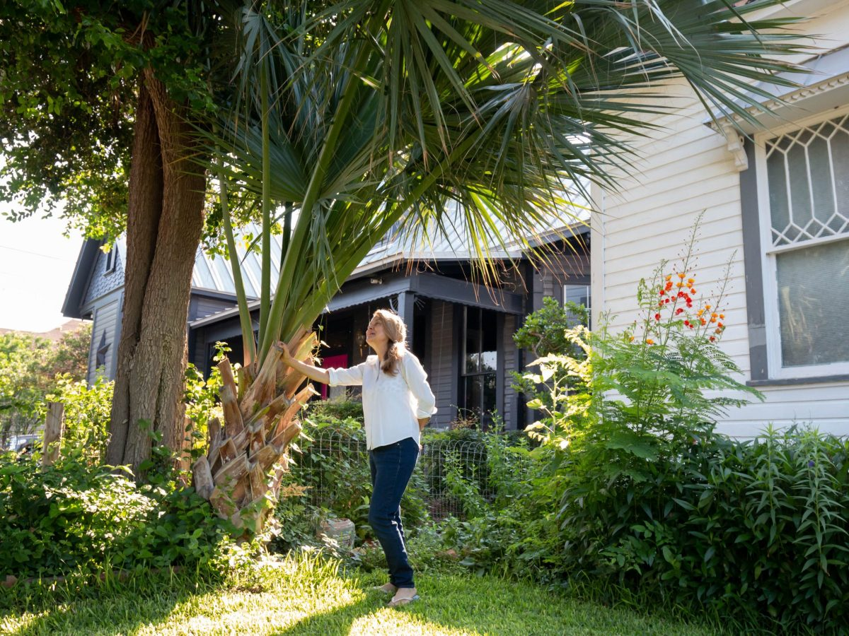 Naomi admires a palm tree in her front garden originally planted by American poet, and her friend, W.S. Merwin. Nye said she first read his poetry while she was studying at Trinity University. This palm tree was planted from an offshoot Merwin took from a Palm tree farm in Gonzalez, Texas many moons ago.
