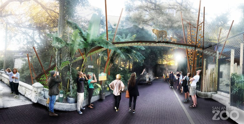A new Pantera Walk will soon open at the San Antonio Zoo, effectively enlarging the jaguars' territory by 120 percent.