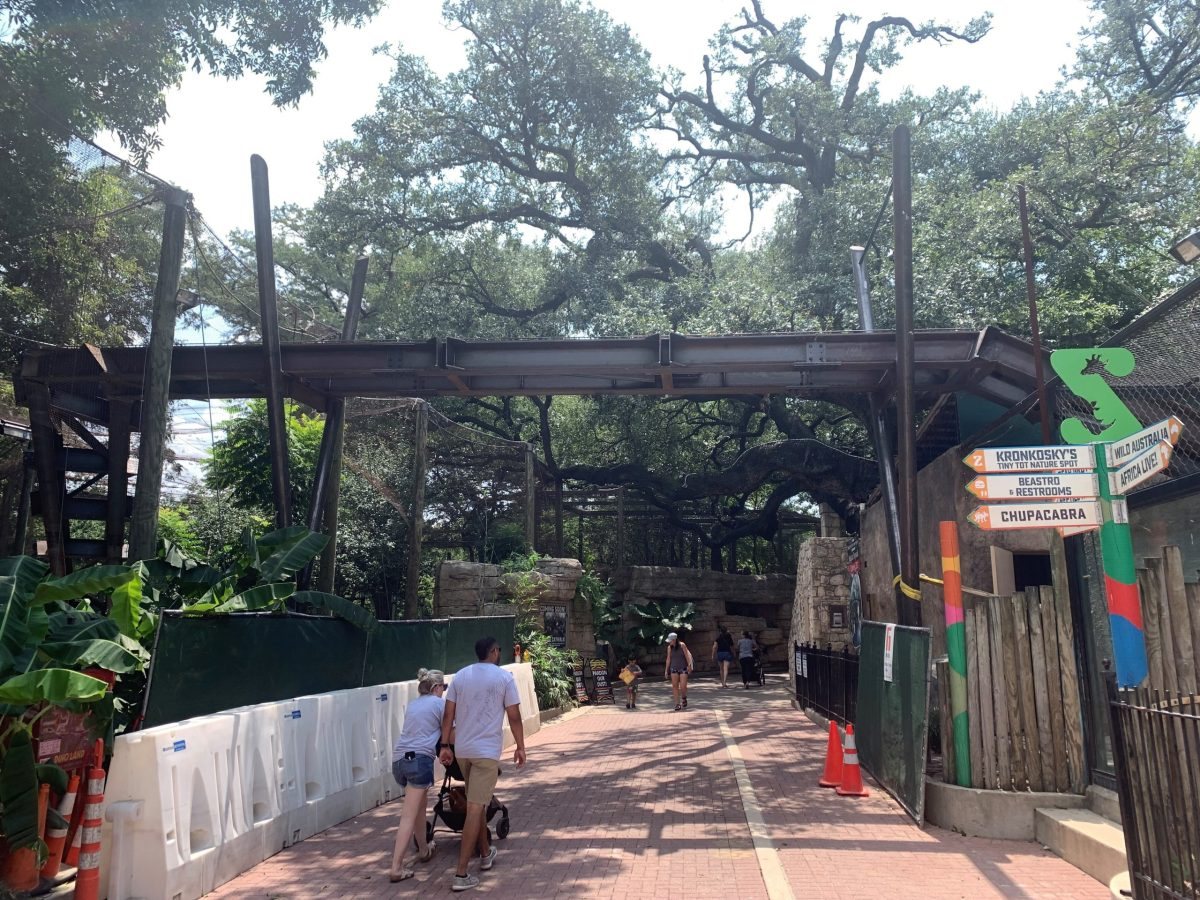 Structural beams are in place for the new Pantera Walk at the San Antonio Zoo. The Pantera Walk is the main feature offered by a new exhibit called Neotropica.