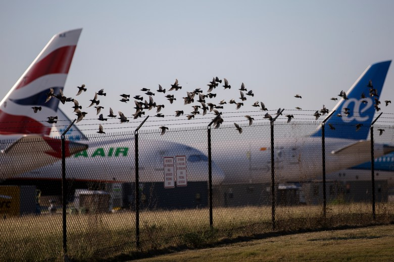 A flock of birds take off near grounded Boeing 737 MAX 8 planes at Kelly Field on Thursday.