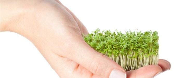 Lucia Gavriliță te învață cum să crești germeni și vlăstari acasă! Vino rapid la curs, pentru că sănătatea are culoare verde!