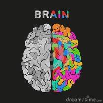 emisfero-destro-e-sinistro-del-cervello-illustrazione-di-concetto-di-vettore-76772555