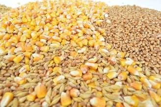 grains-1621880_960_720