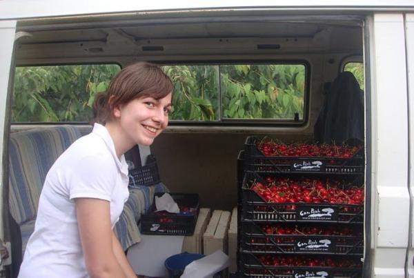 Recolectando cerezas en mi pueblo allá en el 2010