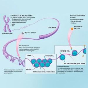 Epigenética-Chart