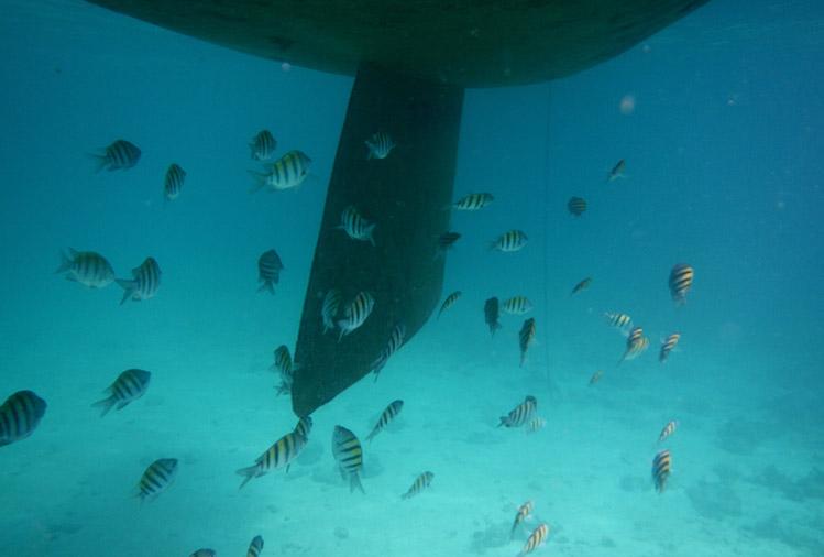 marinelife San Blas