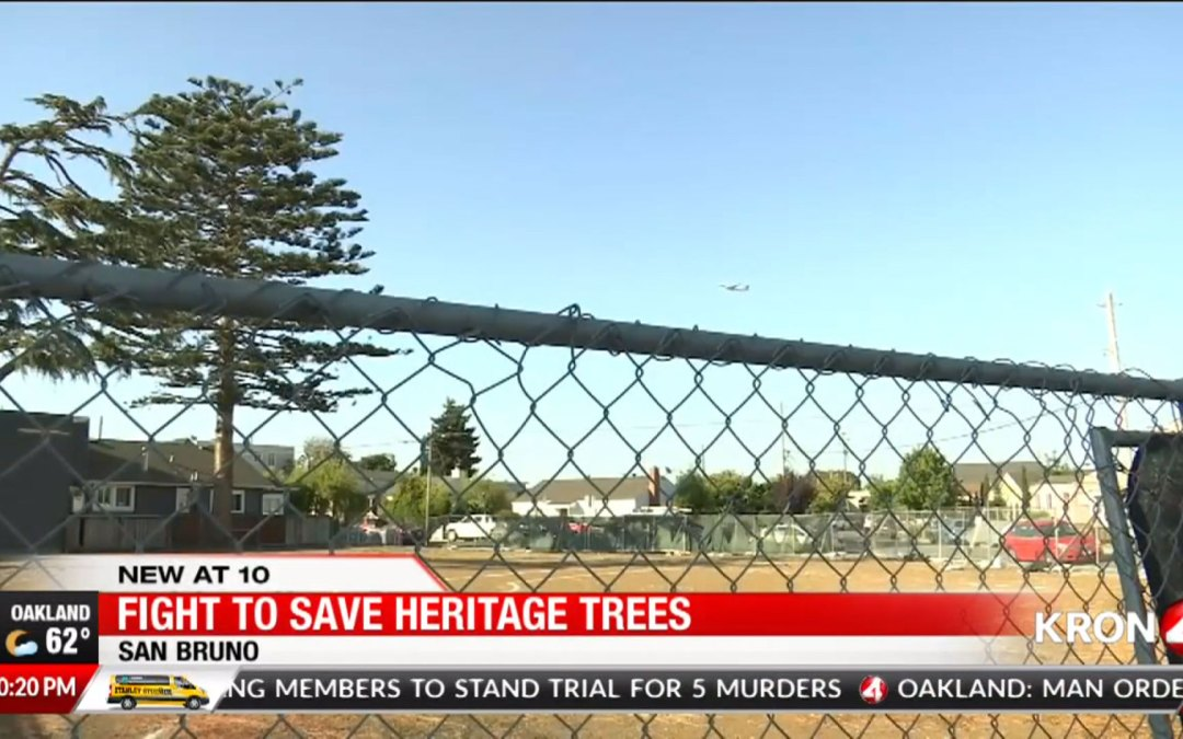 SAVE THE TREES PETITION