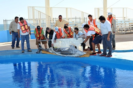 Dolphin Discovery Arrives with 4 new Dolphins in San Carlos