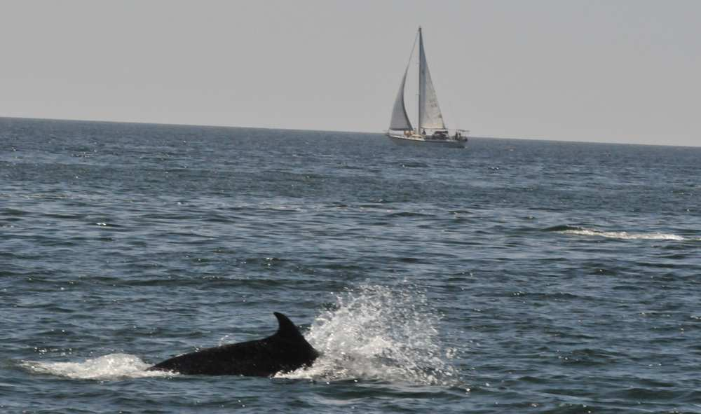 Dolphin Discovery Pulls out of San Carlos but is it really because of a fungus?