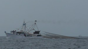 Shrimp Trawler just  south of  Topolobampo