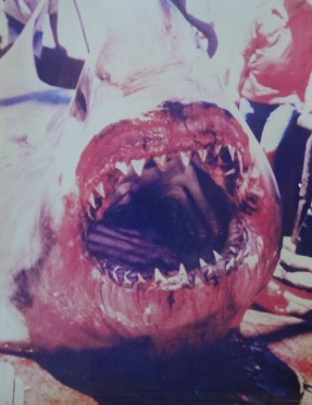 Dead Great White smiles for the camera
