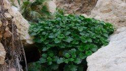 P1730164 Plant
