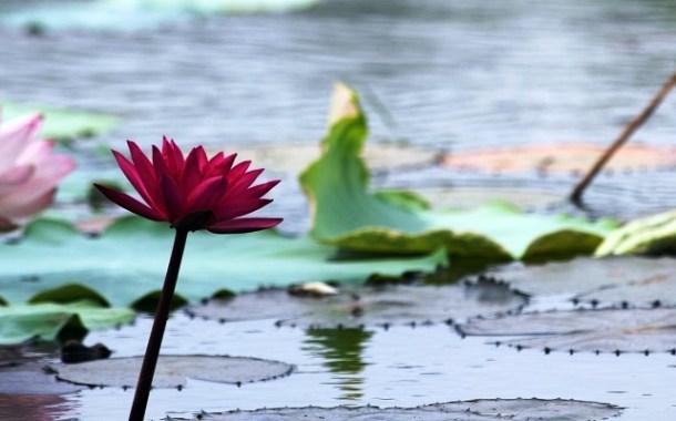 కాలదర్శిని: భారతీయ తాత్విక చింతన - మన కర్తవ్యం