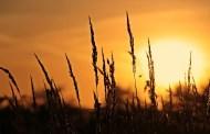 మానస సంచరరే-26: మదిలో దీపం వెలిగించు!