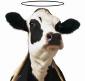 holy_cow.jpg