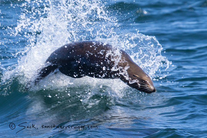 Moss Landing Sea Lion