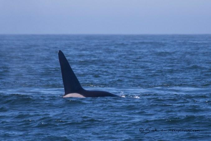 Moss Loss Landing Orca
