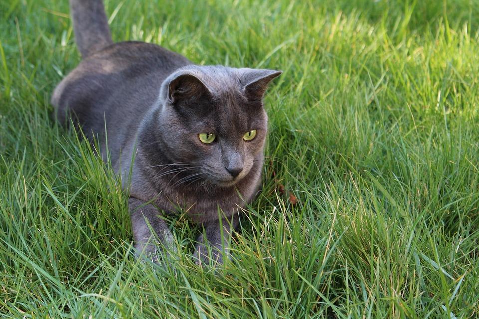 Cat Playing in Garden